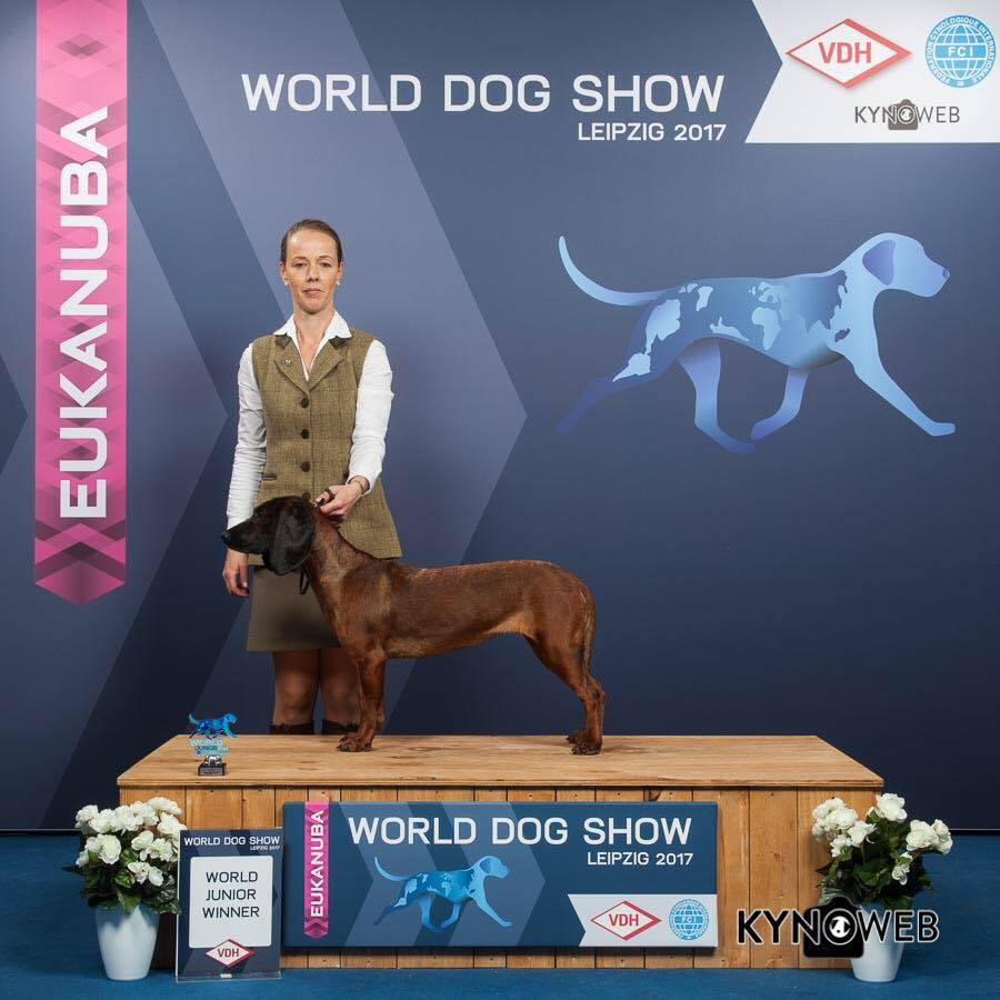 world junior winner worlddogshow bgs