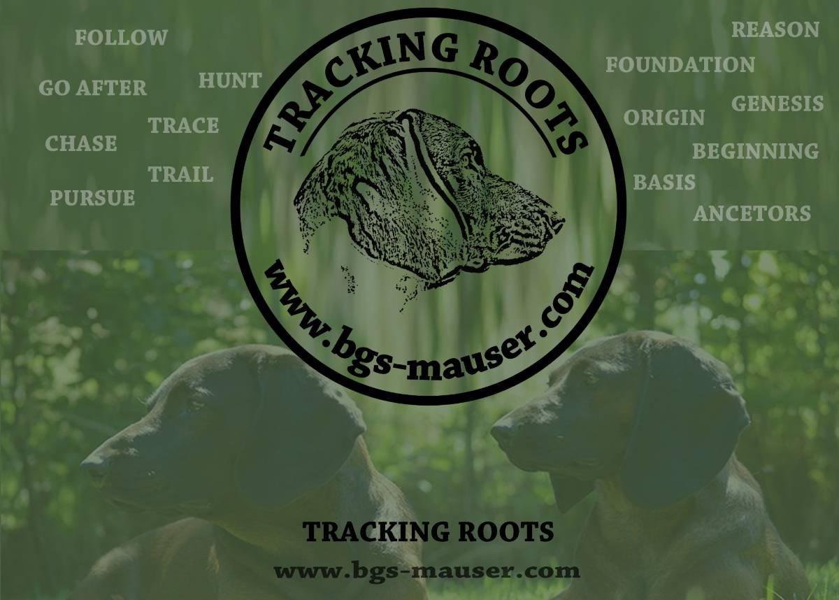 trackingroots bgs-mauser kennelbgs tracking roots
